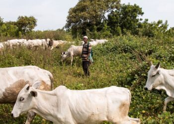 Grazing Routes: What the Land Use Act says