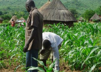 FG to use space technology to boost Agriculture- NASRDA